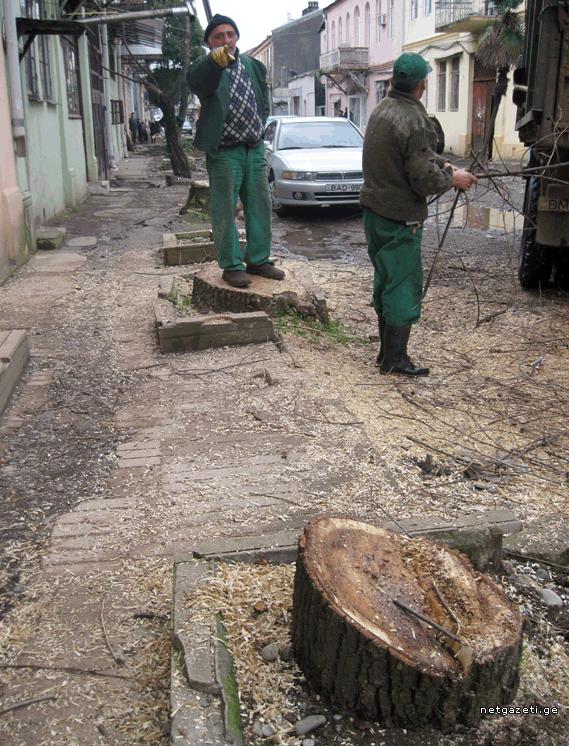 ძველი ბათუმი ხეების გარეშე