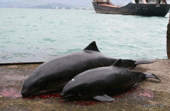 დელფინები სასიკვდილო ბადეში