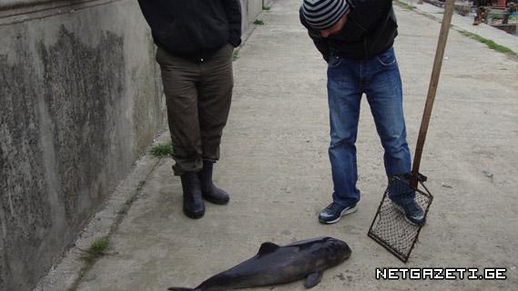 ბოლო სამი წლის განმავლობაში ბათუმის სანაპიროზე ზღვამ ასამდე მკვდარი დელფინი გამორიყა
