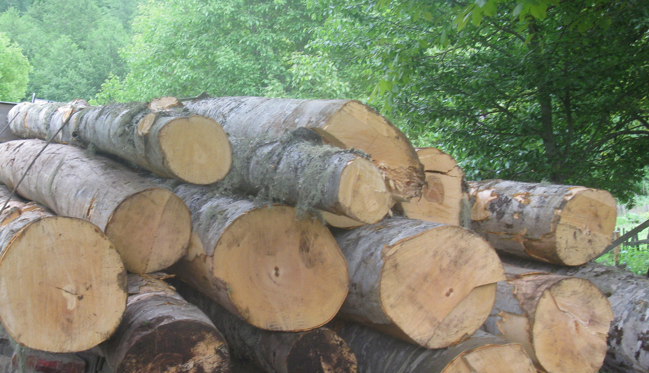 """M² უძრავი ქონება"" პარლამენტს ხეების ჭრის პროცედურის გამარტივებას სთხოვს"