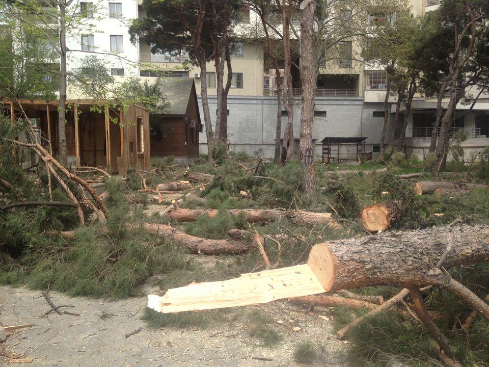 პარლამენტმა დაავადებული ხეების ჭრაზე კანონპროექტი პირველი მოსმენით მიიღო