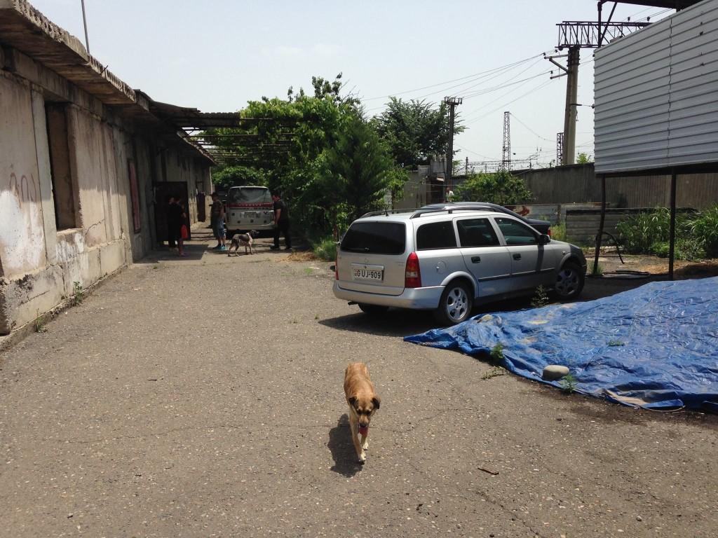ტერიტორია, რომელიც ძაღლების თავშესაფარს გადაეცა