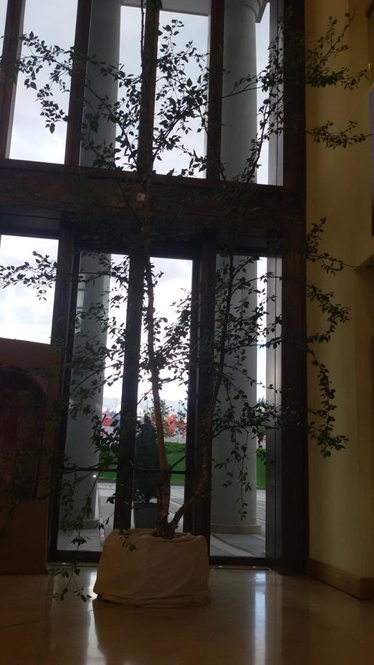 არყის ხე/პრეიდენტის საჩუქარი ილია მეორეს