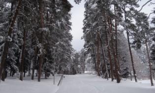 თოვლი, იანვარი, 2016. აბასთუმანი, საქართველო. ფოტო: ნეტგაზეთი
