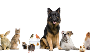 slider_all-animals