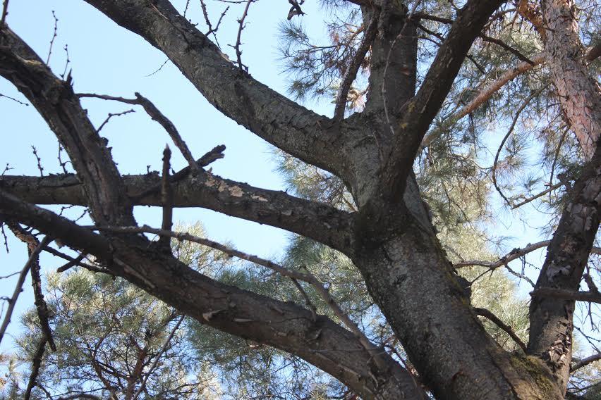 მწვანე ალტერნატივამ და  პარტიზანებმა  პარლამენტს ხეების ჭრის დარეგულიების ინიციატივით მიმართეს
