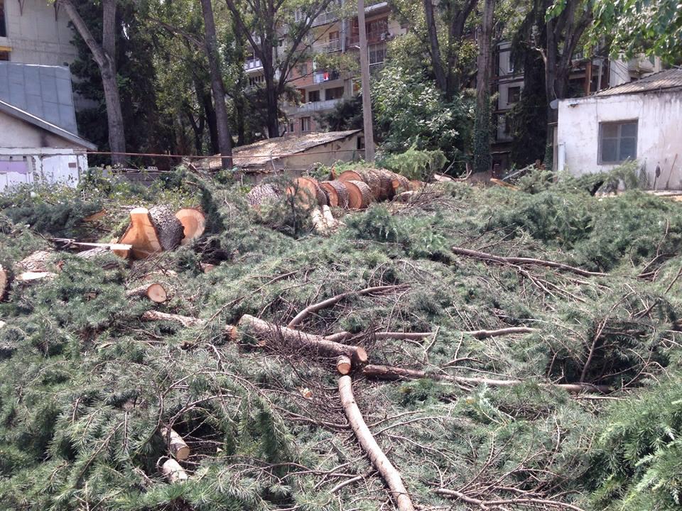 თბილისში მრავალსართულიანი კორპუსების მშენებლობის გამო საღი ხეები გაჩეხეს