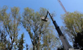 ყაზბეგის გამზირზე ხეების ჭრა გრძელდება. 24.08.2016. ფოტო: ათინა ბრეგვაძე/ნეტგაზეთი