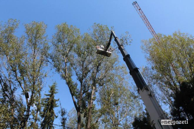 მერია, მორატორიუმის მიუხედავად, ყაზბეგის გამზირზე ხეების ჭრას უსაფრთხოების მიზნით ხსნის