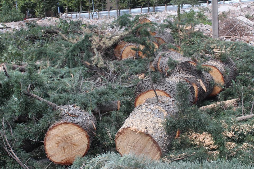 დაავადებული ხიდან ჯანსაღ ხეზე გადასვლა – რა საფრთხეებს შეიცავს M²-ის ინიციატივა