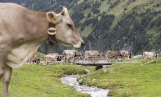 Switzerland, 24 August 2015.  EPA/URS FLUEELER