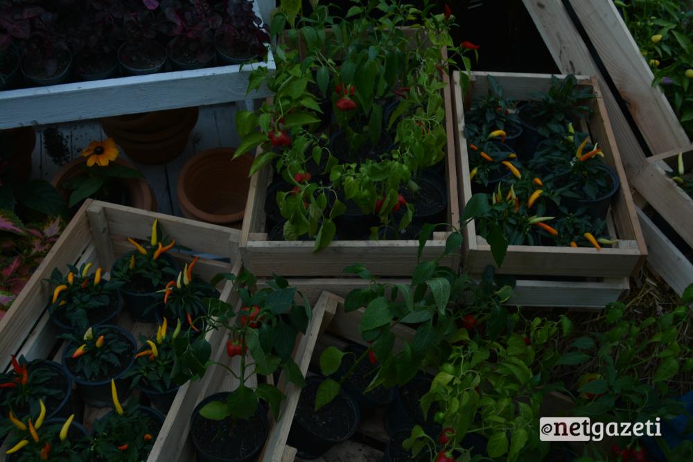 ფლორისტებმა ქუჩებში გასაყიდად მცენარეები გამოიტანეს. 15.10.16 ფოტო: ნეტგაზეთი/მარიამ ბოგვერაძე