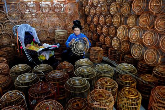 ჩინელი ქალი ბამბუკით ფრინველებისთვის გალიას ამზადებს. სოფელში სადაც 125 ოჯახი ცხოვრობს, 96 თავს ამ საქმიანობით ირჩენს. ბამბუკის გალიების გაყიდვა ამ სოფელში საუკონოვანი ტრადიციაა: EPA/STR