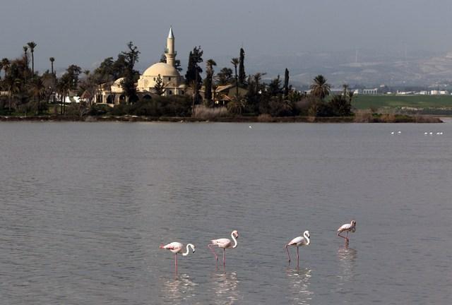 ვარდისფერი ფლამინგოები მლაშე ტბაში. უკან ჩანს ხალა სულთან ტეკეს მეჩეთი. ფოტო: EPA/KATIA CHRISTODOULOU