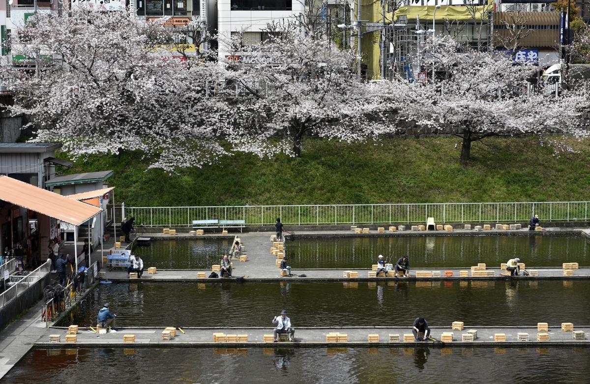 საკურა ტოკიოში. 06.04.2017 ფოტო: EPA/FRANCK ROBICHON