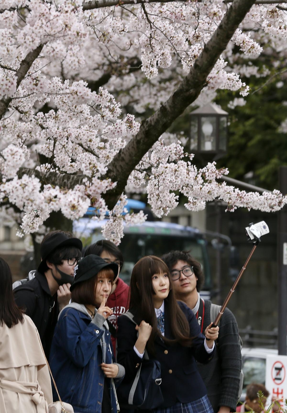 საკურა ტოკიოში - აყვავბული ალუბლების ფონზე სელფენს იღებენ. 06.04.2017 ფოტო: EPA/KIMIMASA MAYAMA