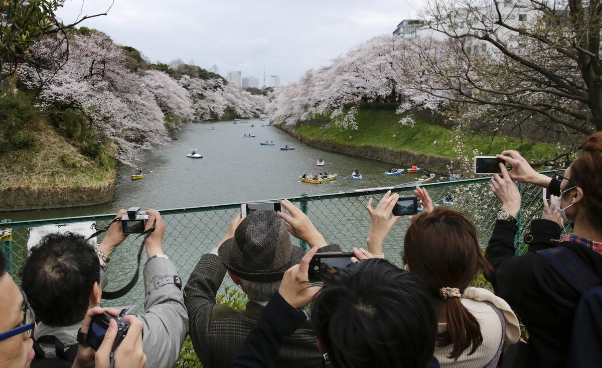 საკურა ტოკიოში - აყვავებული ალუბლებს ფოტოებს უღებენ. 06.04.2017 ფოტო: EPA/KIMIMASA MAYAMA