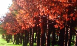 დამწვარი ხეები ლისის ტბაზე. ფოტო: ლევან ხაბეიშვილი