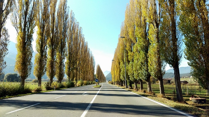 კანონპროექტით, გზების დეპარტამენტს გზებთან ხეების მოჭრაზე ნებართვის გაცემა შეეძლება