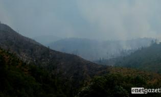 ნახანძრალი ტერიტორია სოფელი დაბასთან 23.08.17 ფოტო: ნეტგაზეთი/თაკო სონღულაშვილი