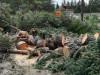 ხეების ჭრა ჭავჭავაძის გამზირზე, ფოტო: ირაკლი ჯუღელი