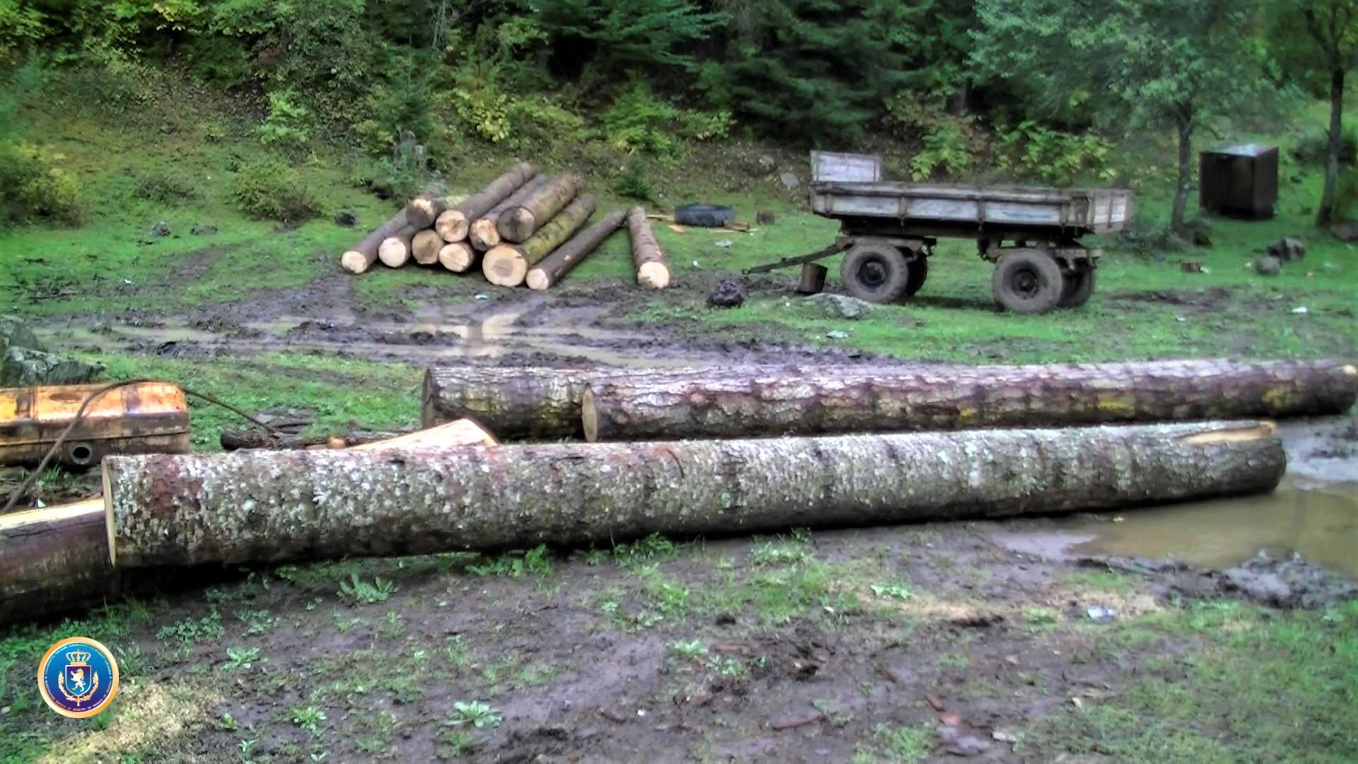 უკანონოდ გაჩეხილი ხეები. ფოტო: ფინანსთა სამინისტრო