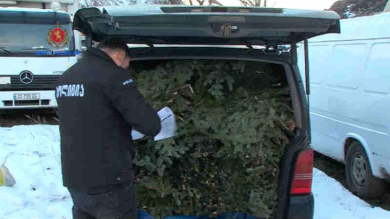 შსს: წიწვოვანი ხეების მოჭრის ბრალდებით ერთი ადამიანი დააკავეს