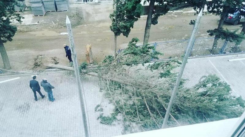 გურამიშვილის გამზირზე ქარმა ხე წააქცია – [ფოტო]