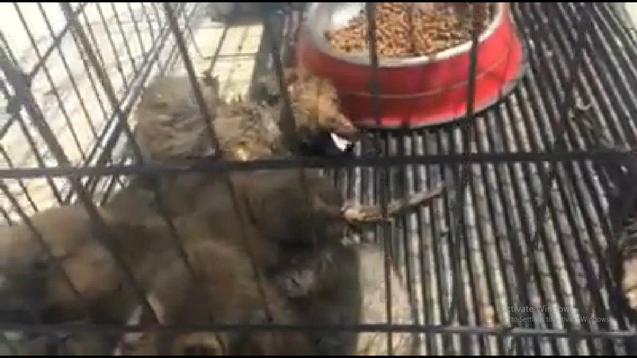ცხოველთა მუნიციპალური თავშესაფრის დირექტორმა თანამდებობა დატოვა
