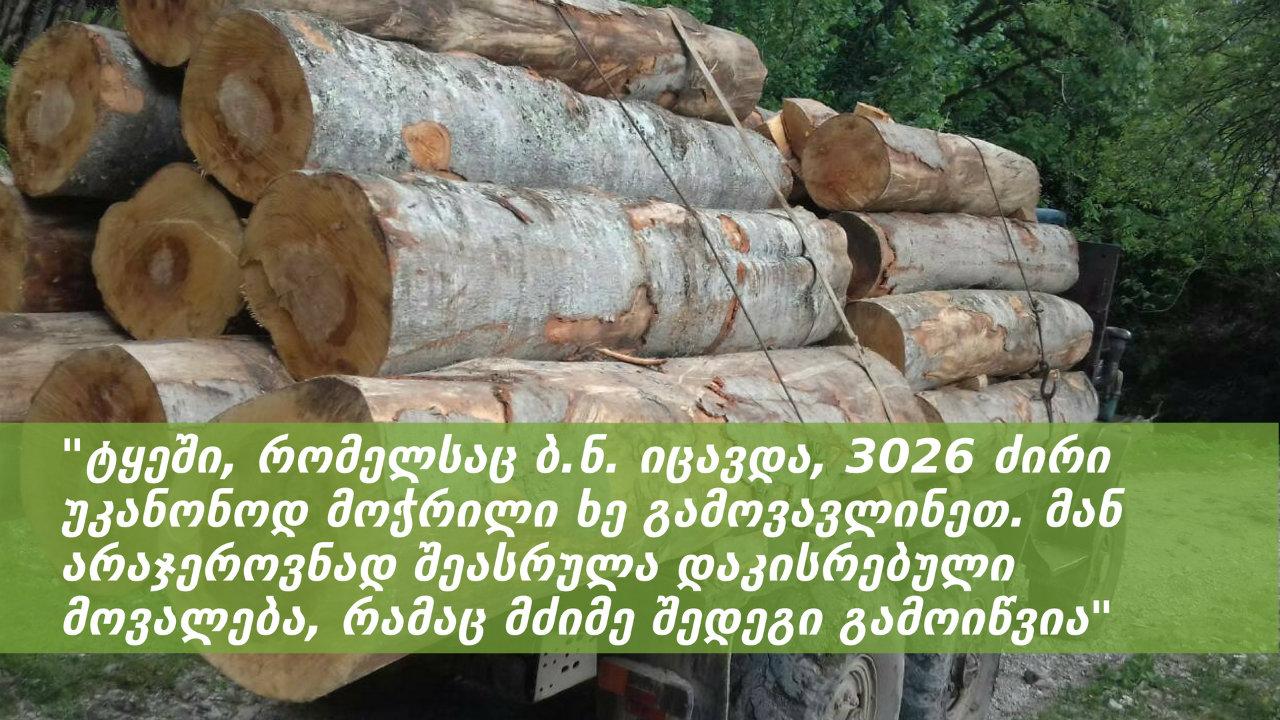 დავაკავეთ ტყის მცველი, ვისი გულგრილობითაც გარემოს 287 200 ლარის ზიანი მიადგა – პროკურატურა