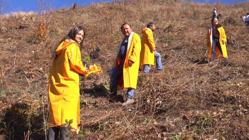 """""""ვისოლმა"""" ბორჯომის ტყე-პარკში საახალწლო აქციის ფარგლებში შეპირებული ნაძვის ხეები დარგო"""