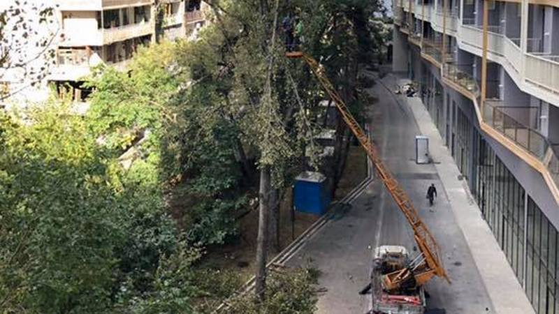 თბილისში, იპოდრომთან, m²-ის კომპლექსთან ხეებს ჭრიან