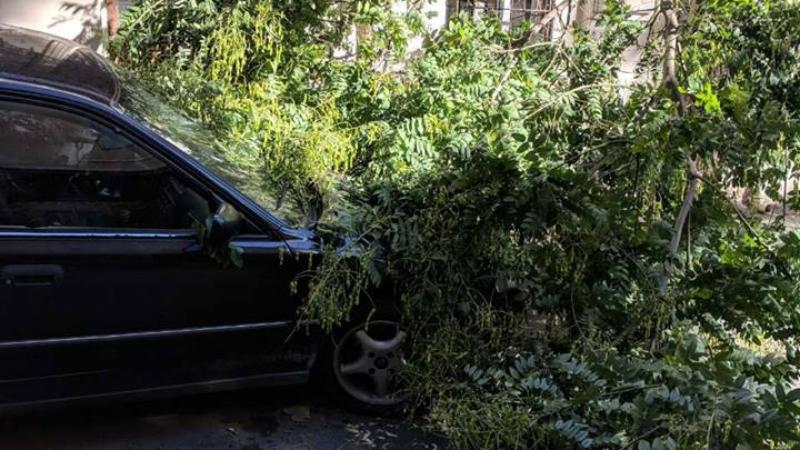 გლდანში ქარისგან მოგლეჯილი ხე ადამიანს დაეცა