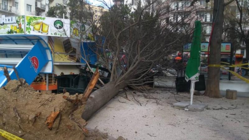 ძლიერი ქარის შედეგად დოლიძეზე ხე წაიქცა და 2 ადამიანს დაეცა