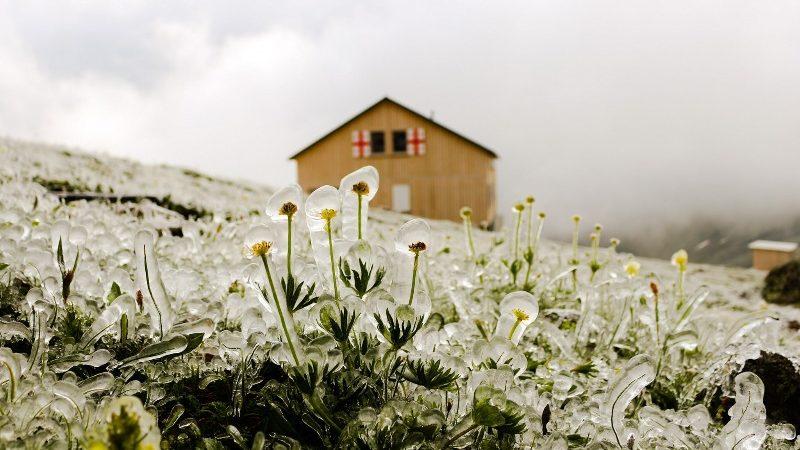 გაყინული ყვავილების ველი ყაზბეგში [ფოტო]