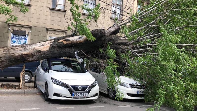სადგურის მოედანთან ქარის გამო წაქცეული ხე მანქანებს დაეცა