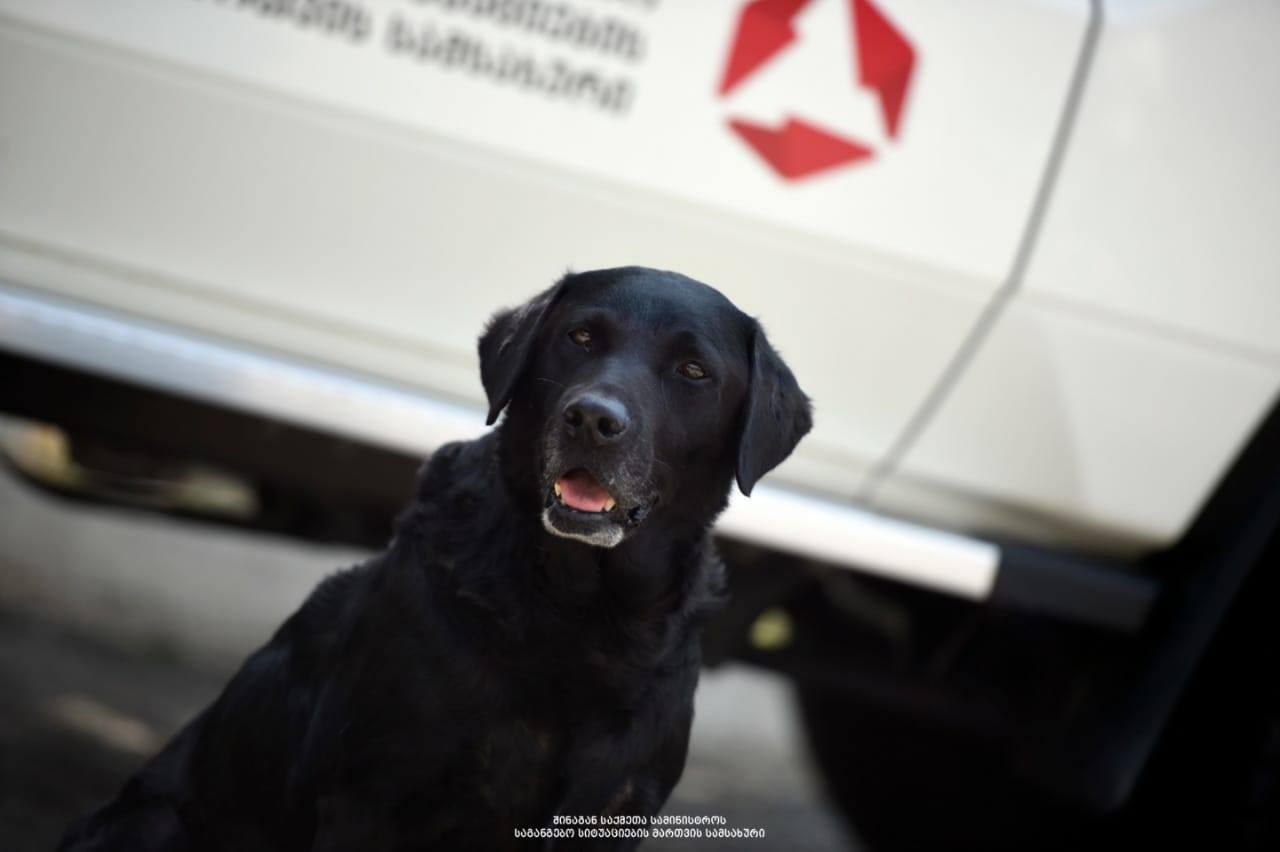 Собака-спасатель Рэй