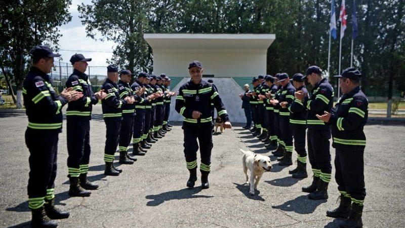 Собаки-спасатели «ушли на пенсию»