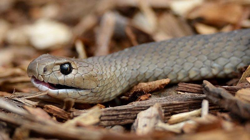 Большинство рептилий отловленных в Тбилиси не опасны — Агентство по мониторингу
