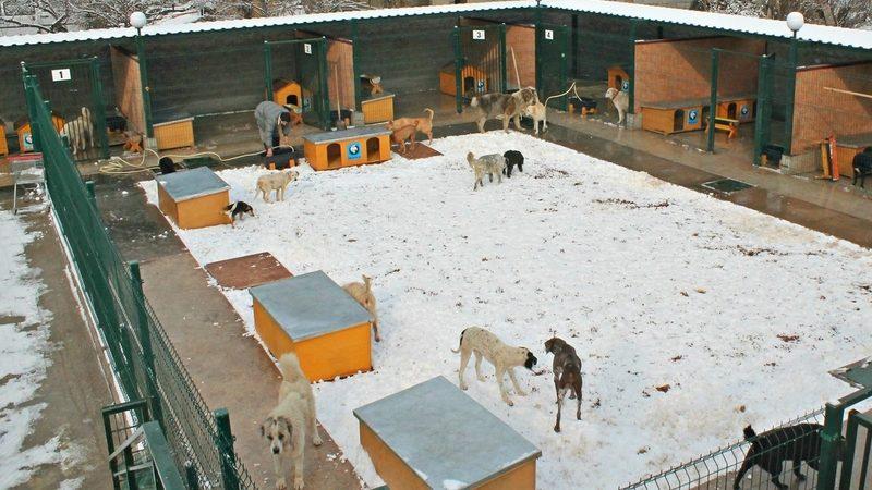 Тбилисский приют для беспризорных собак «отдают даром» из-за финансовых проблем