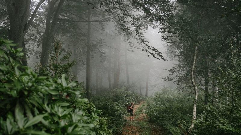 როგორია შემოდგომა აჭარის ტყეებში – სად წავიდეთ, რა ვნახოთ