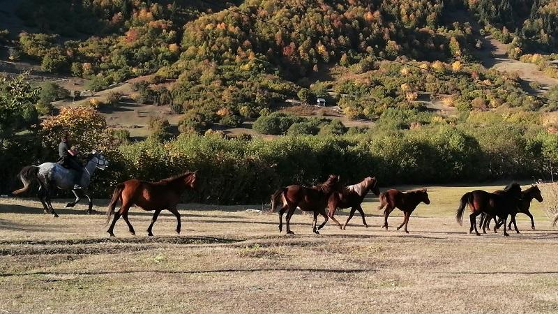 Горжоми — долина всадников и альпийских пейзажей в Аджарии [Фото]