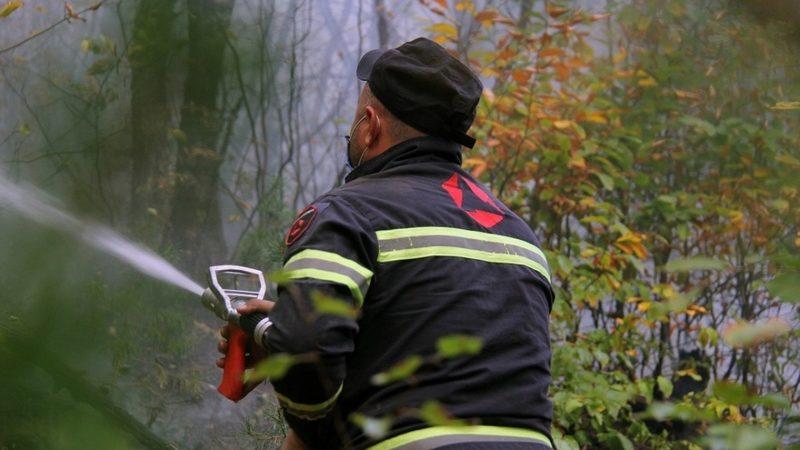 Пожар в лесном массиве Сванети локализован