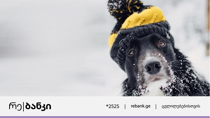 რე|ბანკი მიუსაფარ ცხოველებზე ზრუნვას განაგრძობს