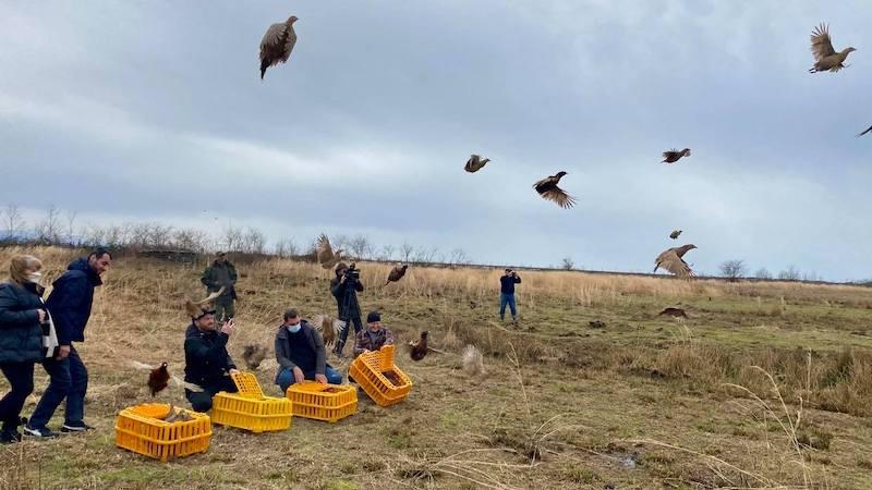 ველურ ბუნებაში 40 ხოხობი გაუშვეს
