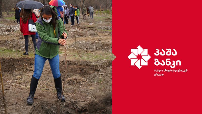 პაშა ბანკმა კრწანისის ტყე-პარკში ხეების დარგვისა და დასუფთავების აქციაში მიიღო მონაწილეობა