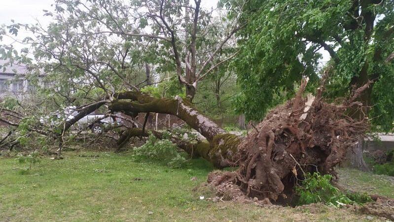 მოთხრილია ხეები, დაზიანდა ელექტროგადამცემი ხაზები და სახურავები – სტიქია ლანჩხუთში