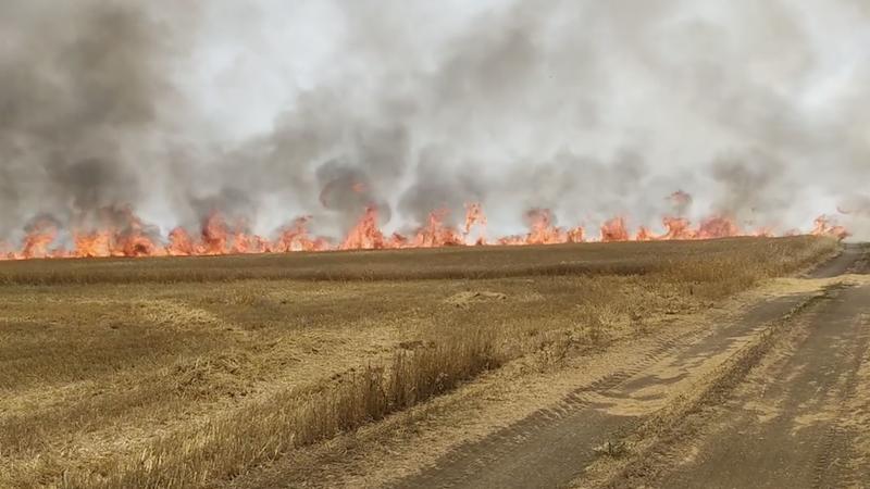 В Кахетии пожар уничтожил посевы зерновых
