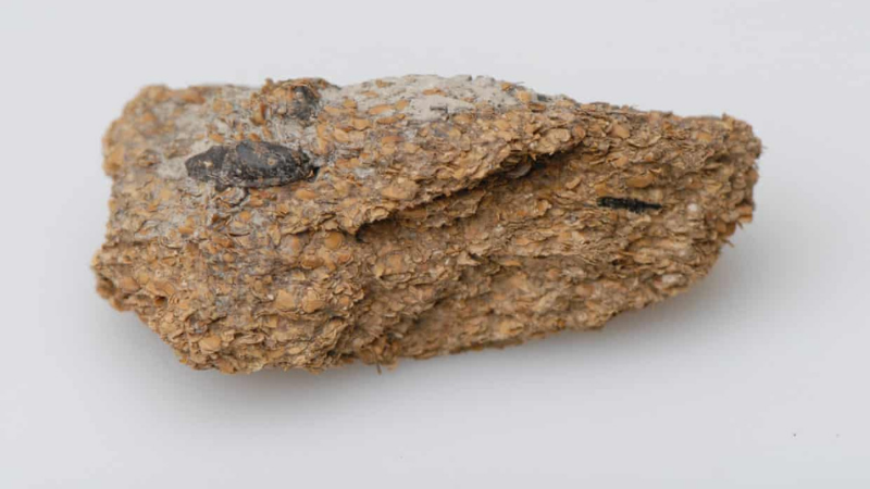Ученые обнаружили, что 2700 лет назад в Европе уже изготавливали пиво и сыр