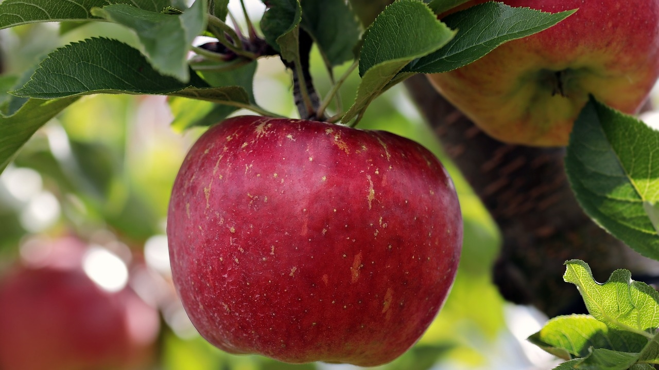 ხილის უნებართვო კრეფის გამო, ბავშვს სცემეს, გააშიშვლეს და დაამცირეს – PHR